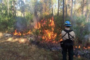 Prescribed fire at Bayard Conservation Area