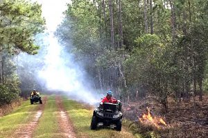 Prescribed fire at Heart Island Conservation Area