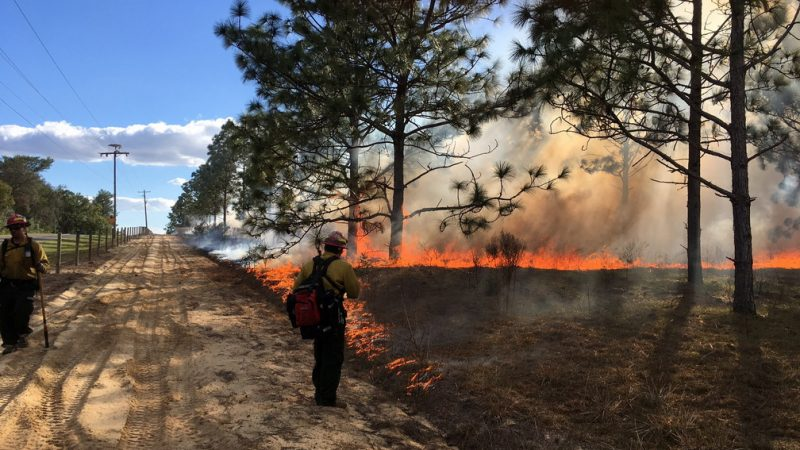 Prescribed fire at Sunnyhill Restoration Area in Marion County