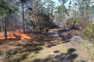 Prescribed fire at Econlockhatchee Sandhills Conservation