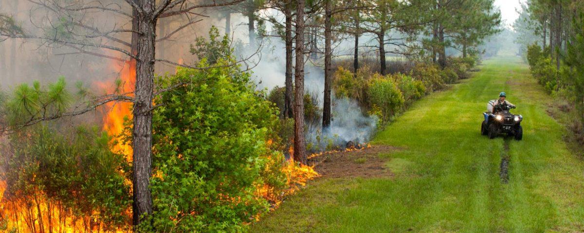 Prescribed fire in Hal Scott Regional Preserve