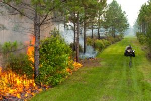 Prescribed fire in Hal Scott Regional Preserve