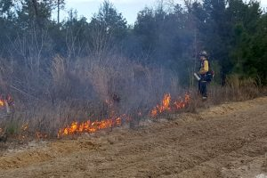 Prescribed fire at fort drum