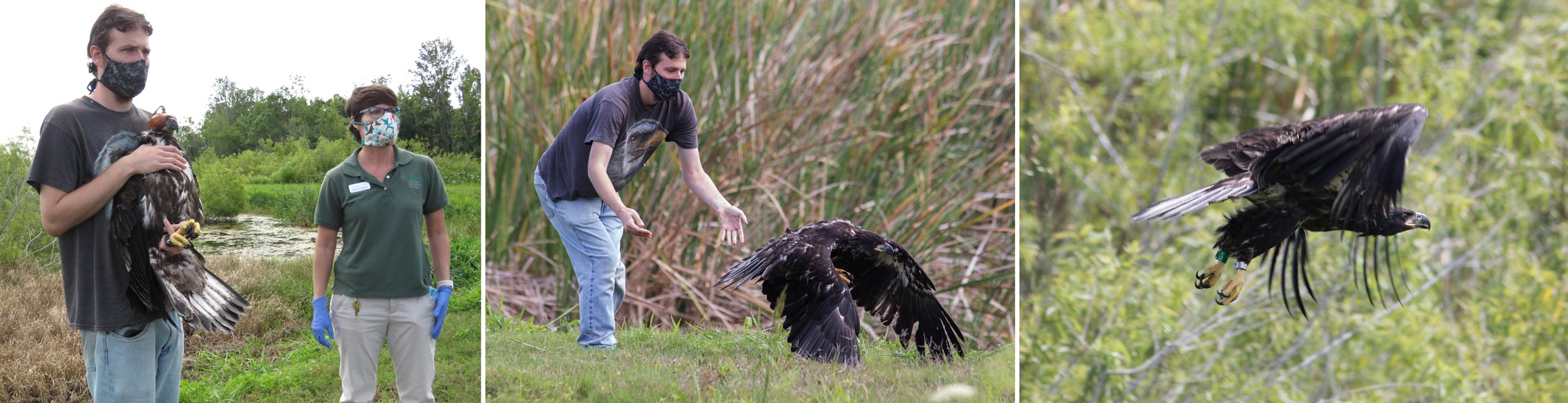 Two district employees release a fledgling eagle