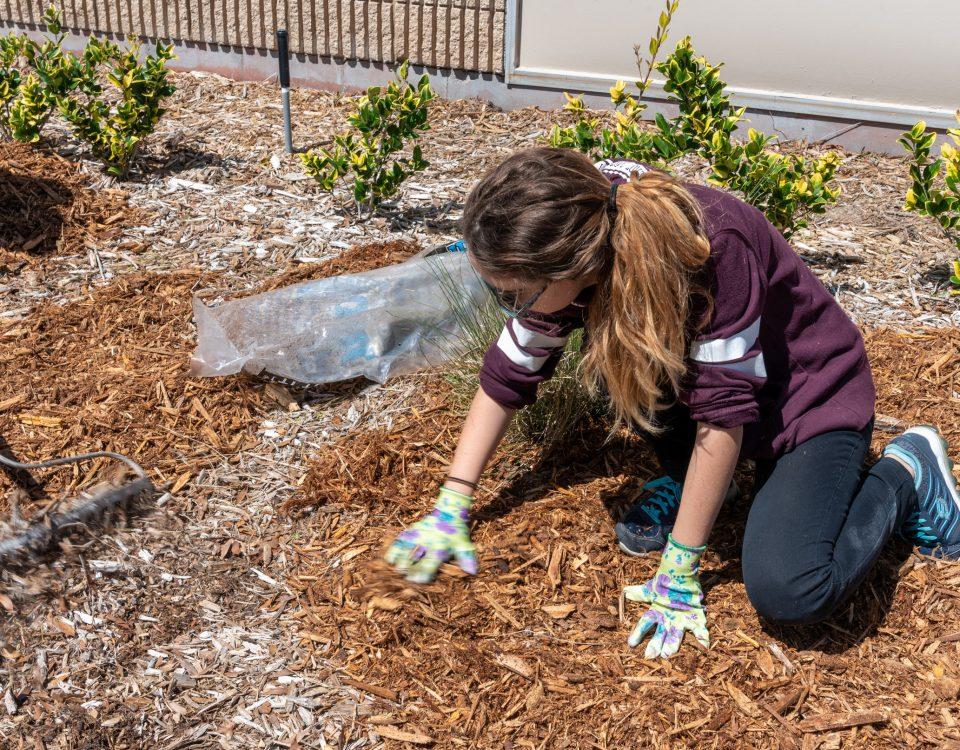 girl mulching bushes