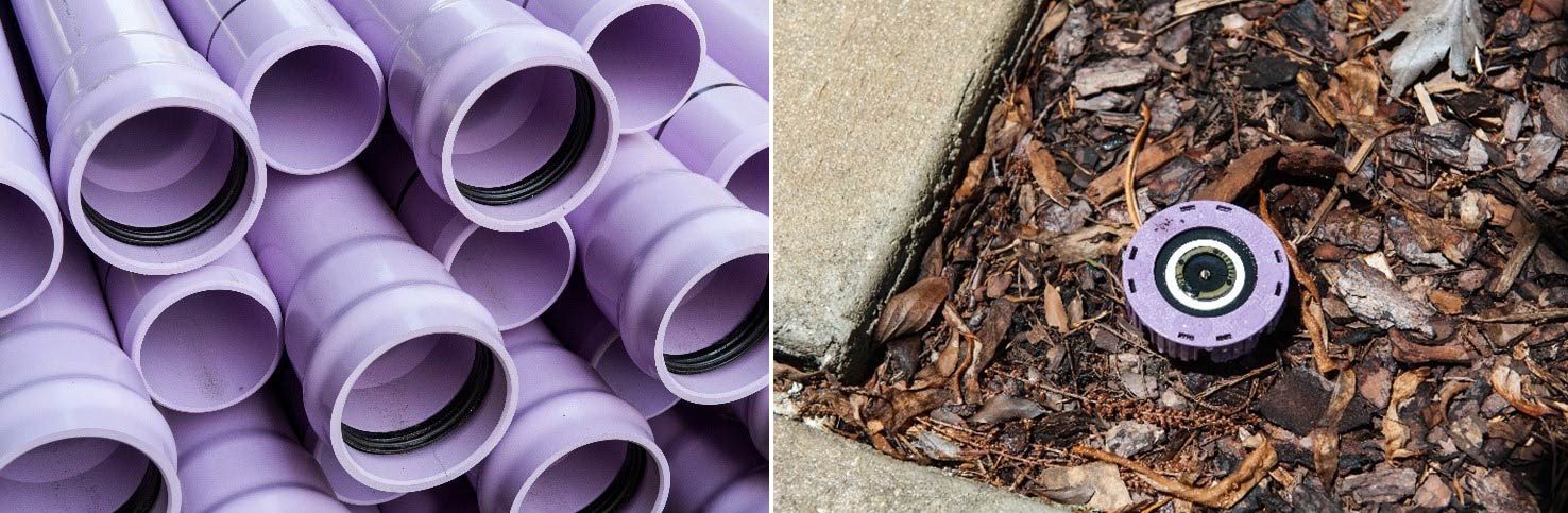 Purple pipes and sprinkler head