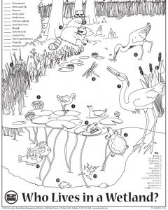 Who Lives in the Wetland coloring sheet