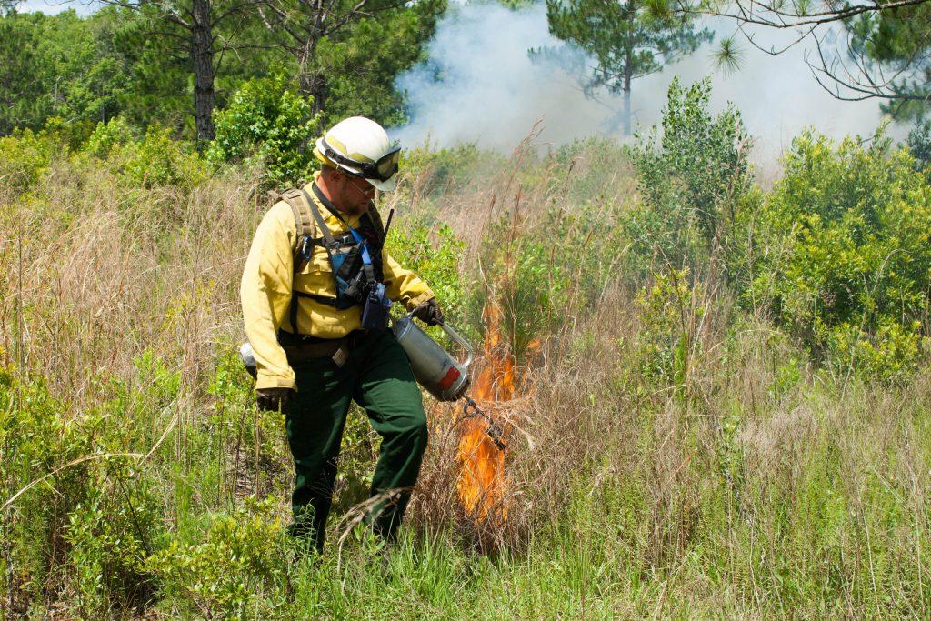 Prescribed fire at Longleaf Flatwoods Reserve