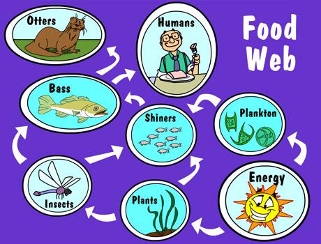 Illustration of a food web