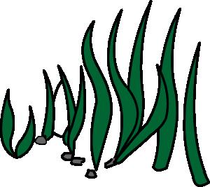 Underwater ecosystem illustration