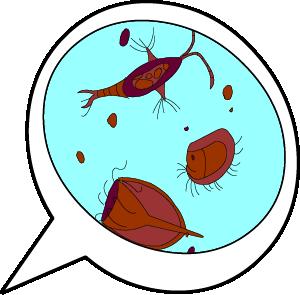 Illustrated Zooplankton