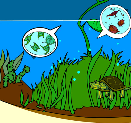 Illustration of an underwater ecosystem