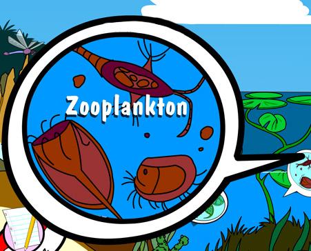 Illustration of zooplankton