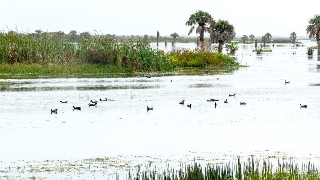 Calm waters at Fellsmere Water Management Area