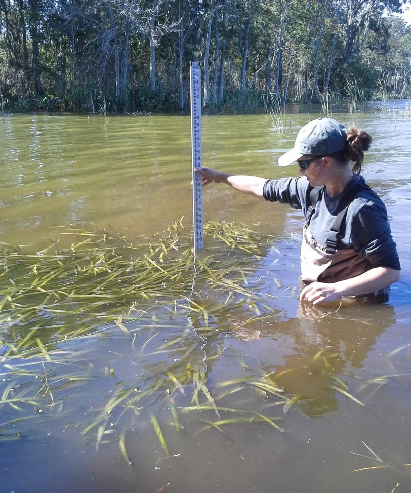 District Environmental Scientist Jodi Slater measures the growth of eelgrass in Lake Apopka.