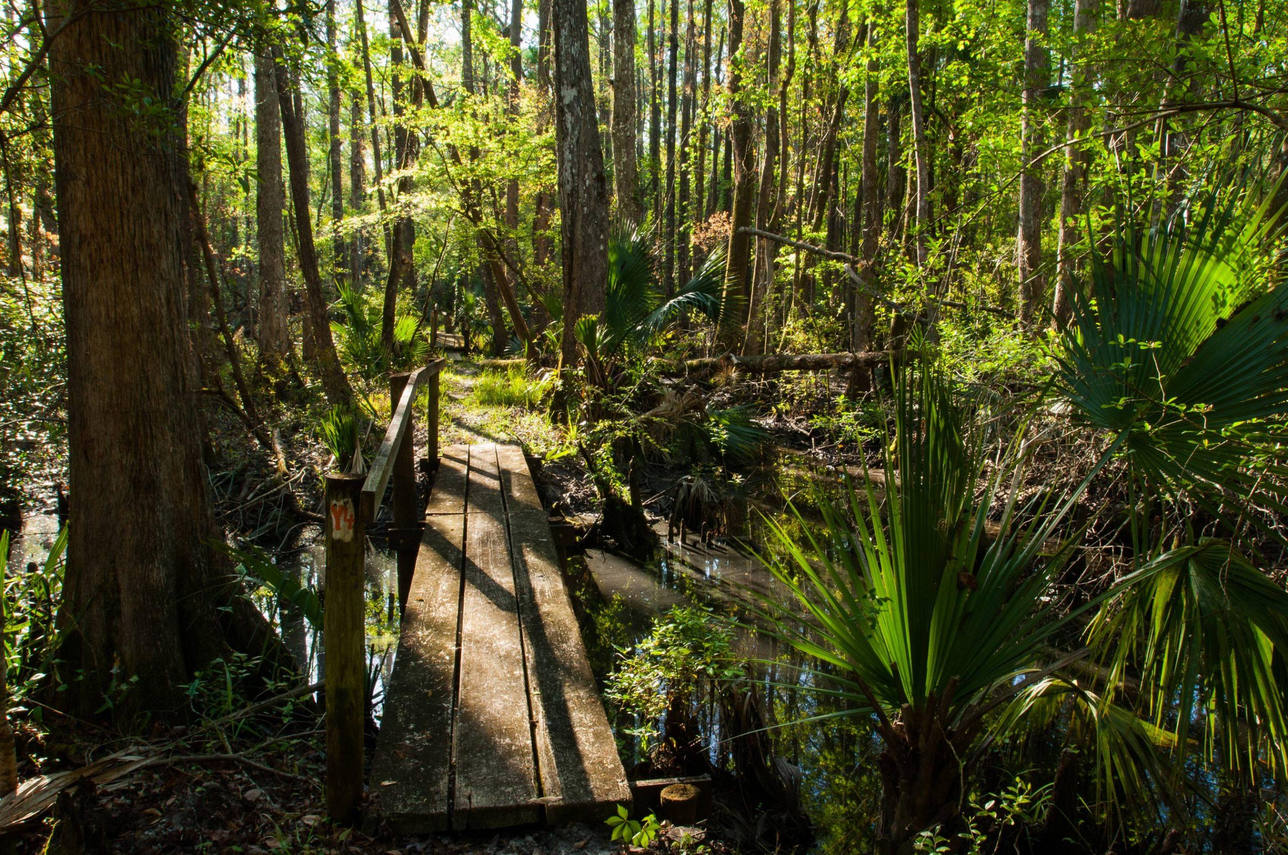 Wooden walking bridge over a stream