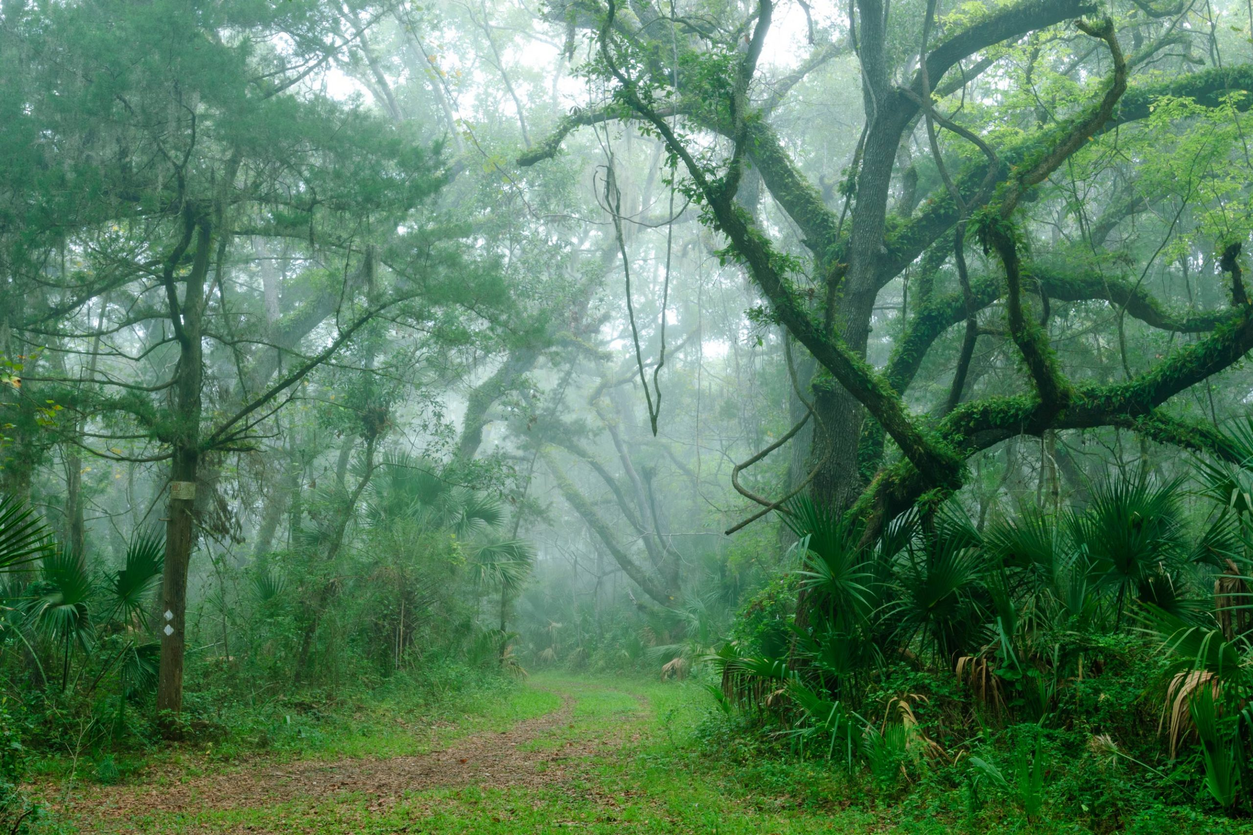 Mists in a flush forest path