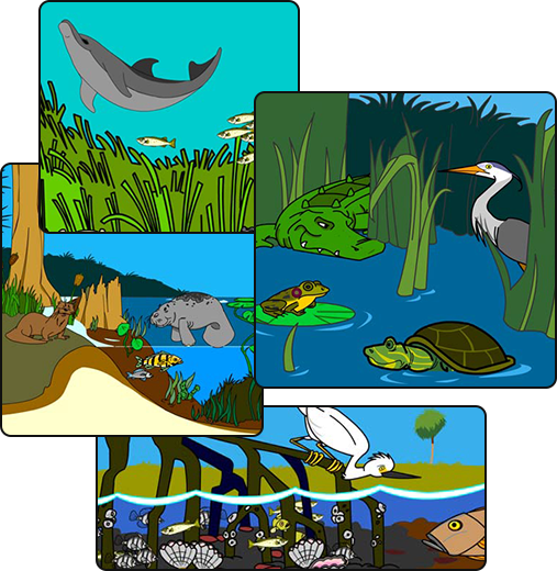 Illustration of various aquatic habitats