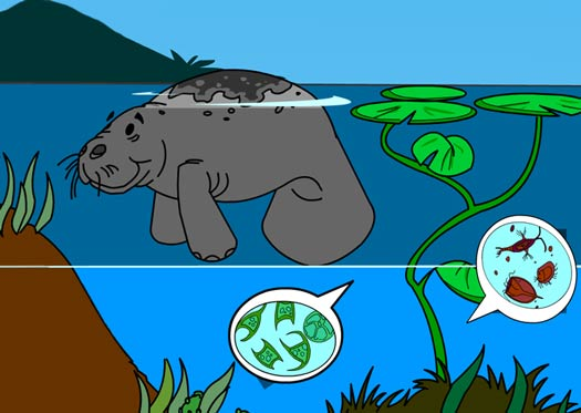 Illustration of a manatee and microscopic organisms
