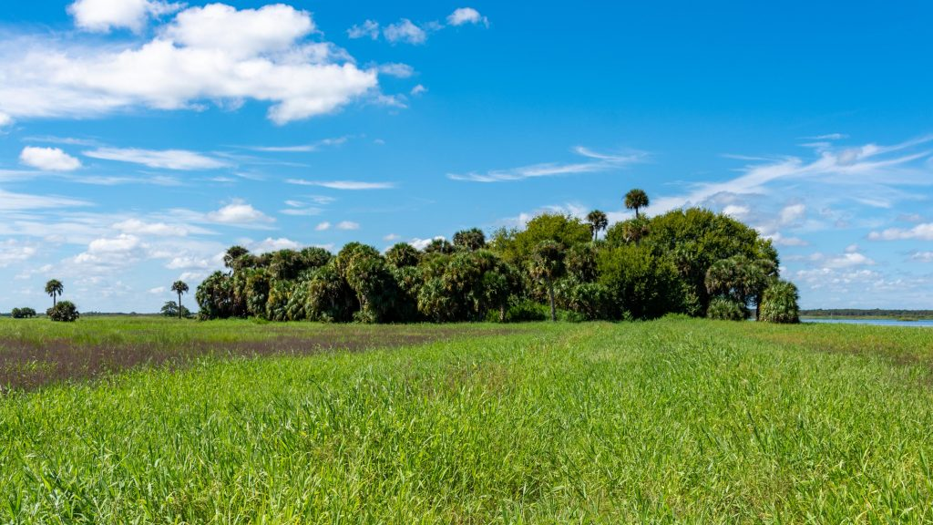 Moccasin Island in River Lakes Conservation Area in Brevard County