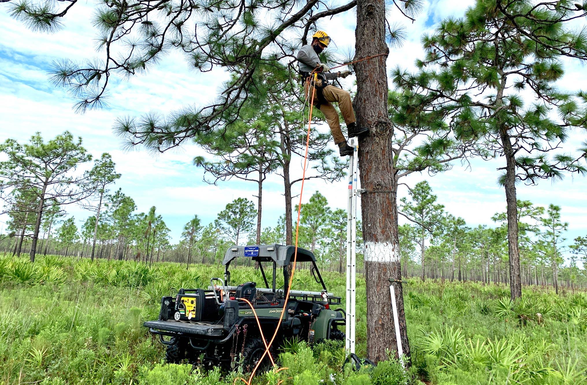 Staff cleaning nesting tree
