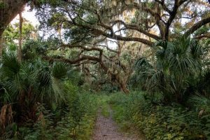 Canaveral Marshes Conservation Area walking path