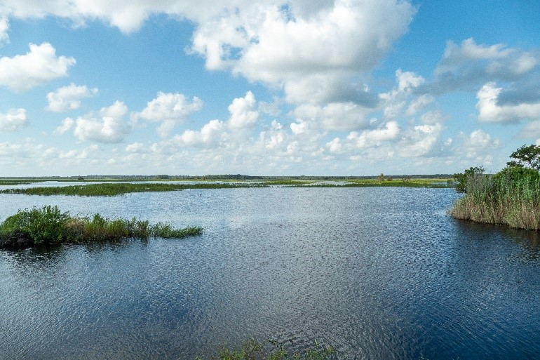 A view of Lake Jesup Conservation Area