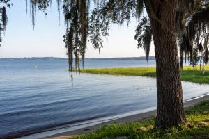 Tree standing in front of Lake Minneola