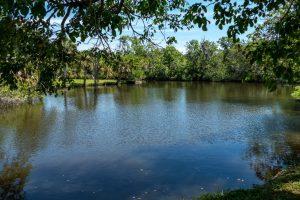 Calm waters at Crane Creek