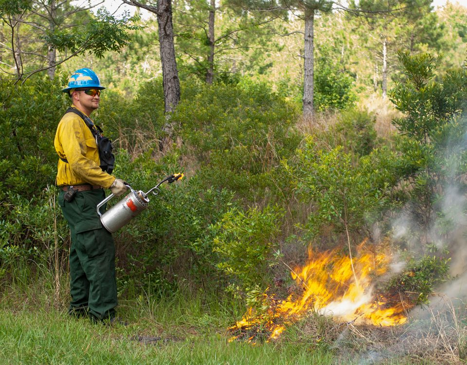 District staff igniting a prescribed fire