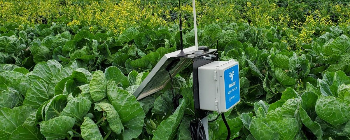soil moisture sensor in a farm
