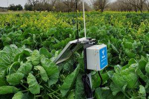 soil moisture sensor in a farm