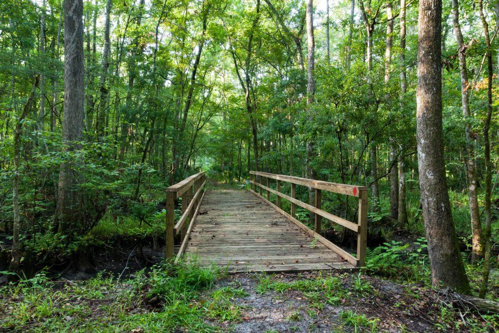 Julington-Durbin Preserve bridge