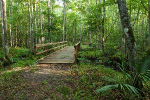 Crosswalk bridge in a forest