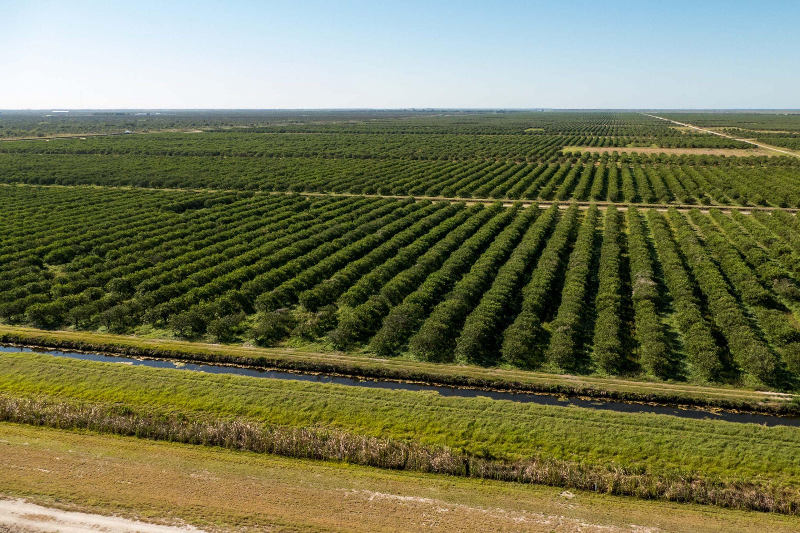 Aerial view of tree farms
