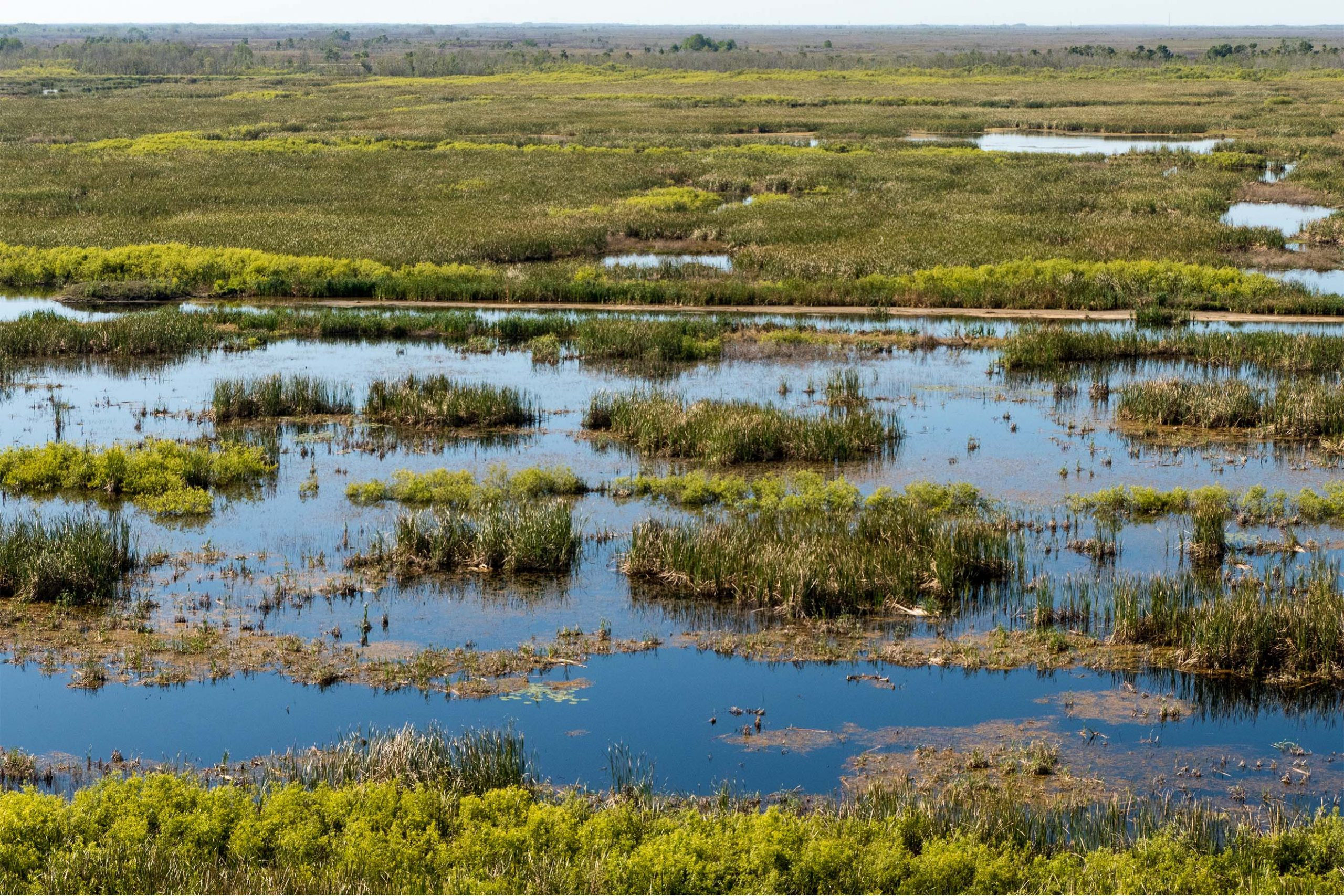 Aerial view of a marshland