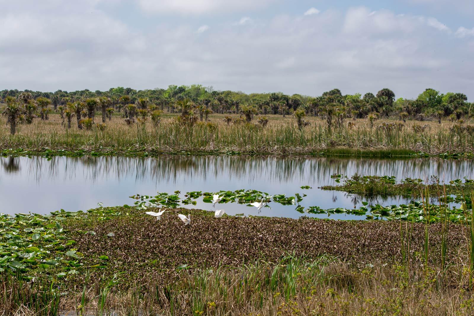 Birds hopping around in a marsh