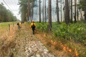 Staff igniting a prescribed fire