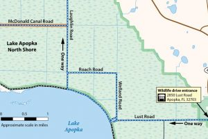 A map of A small section of the Lake Apopka Wildlife Drive