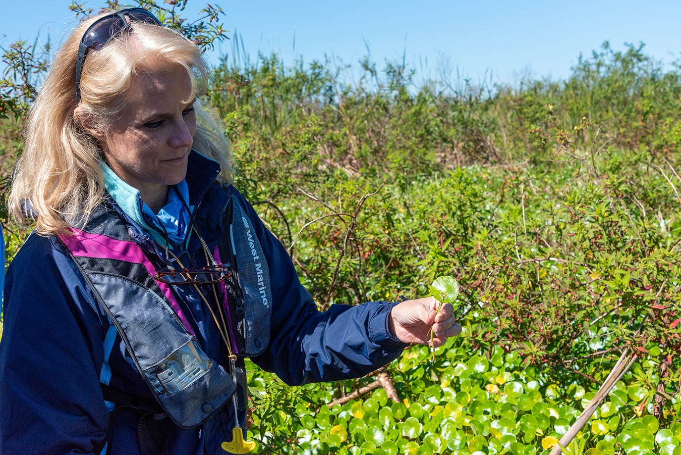 Kim Ponzio conducts a survey of vegetation at the headwaters of the St. Johns River.