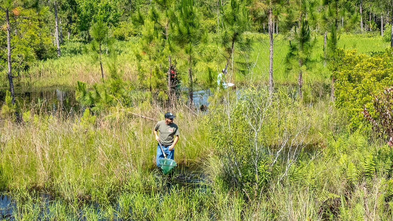 District scientists conduct a survey of plants and animals in District wetlands