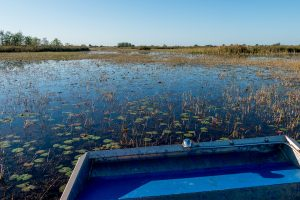 Airboat on a marsh