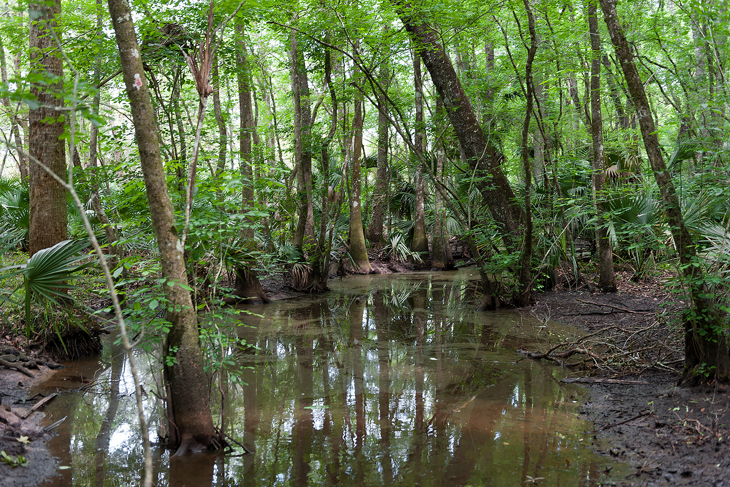 A tree covered wetland at Silver Springs Forest Conservation Area