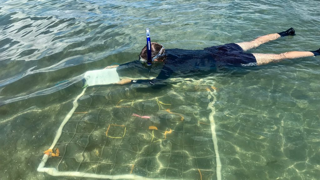Scientist floating above a transect grid in shallow water
