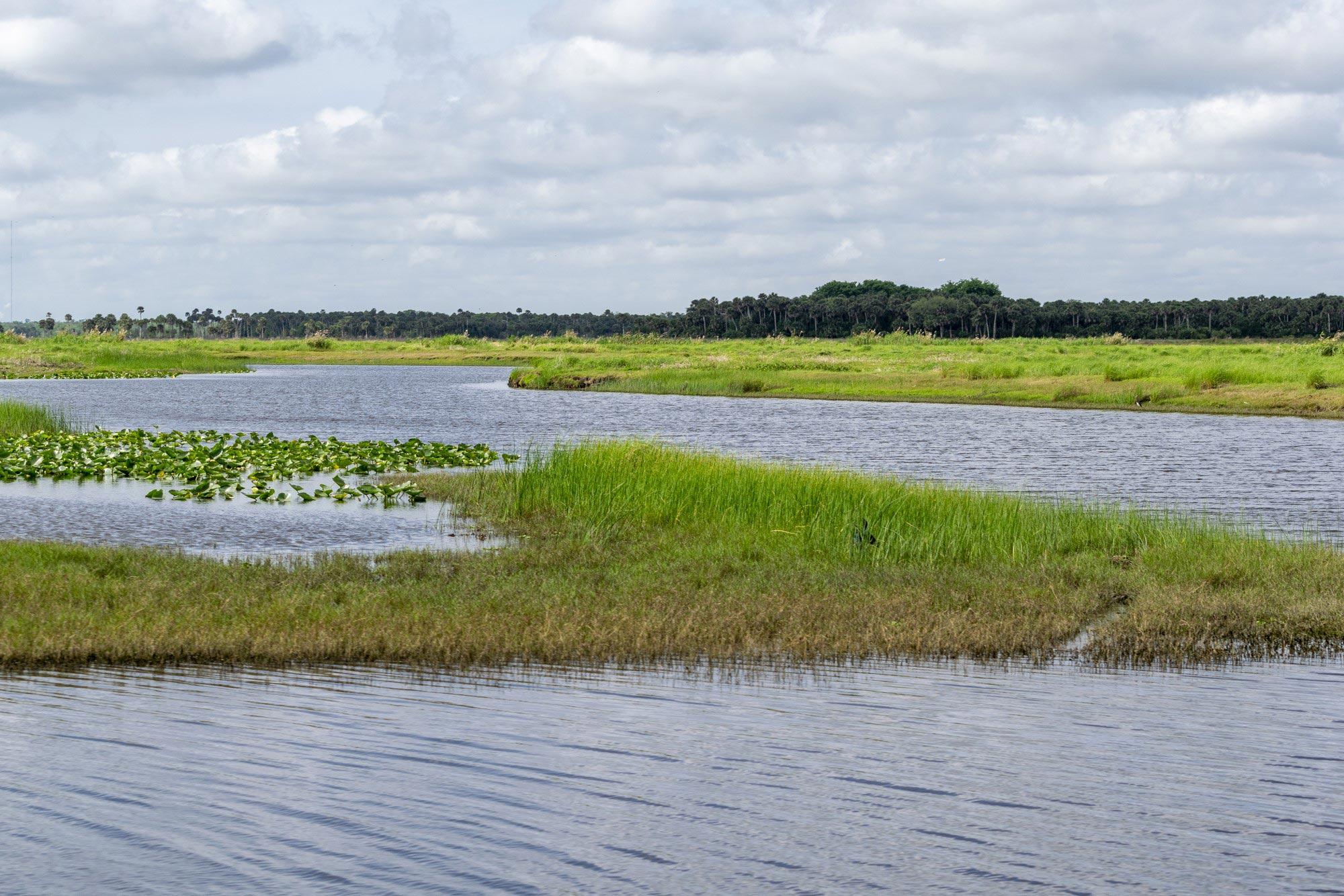 Submerged vegetation at Puzzle Lake