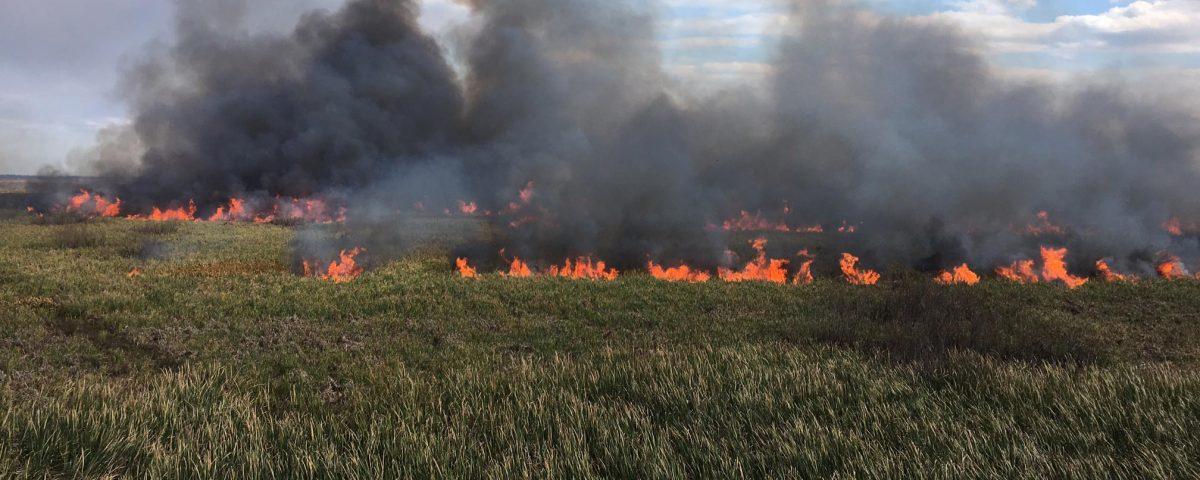 prescribed burn if a grassy area