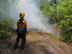 Fire fighter looking at a prescribed fire