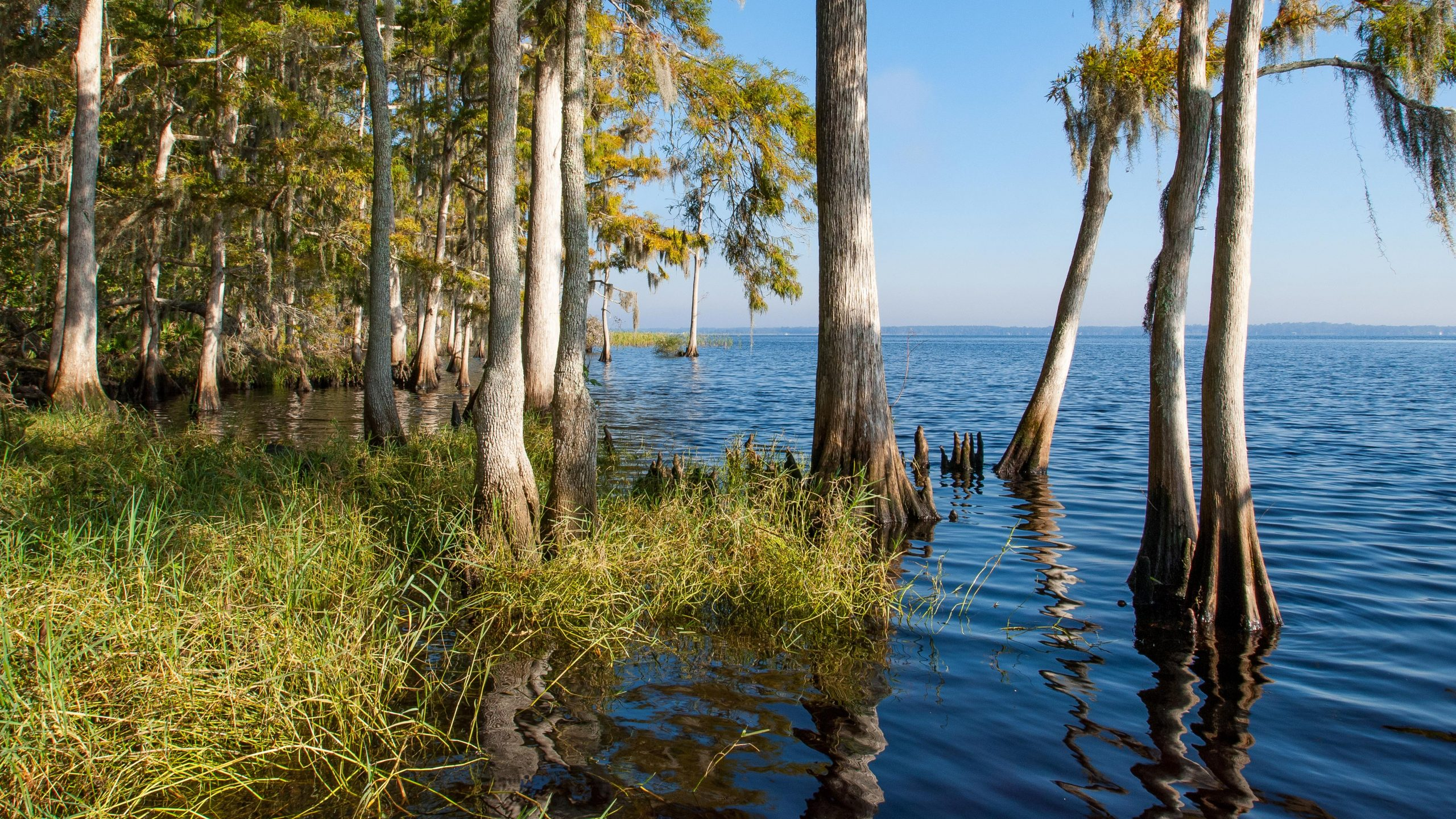 Cypress trees by the Bayard shore