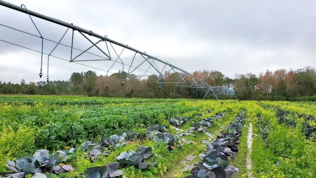 A pivot irrigation system standing over farm crops
