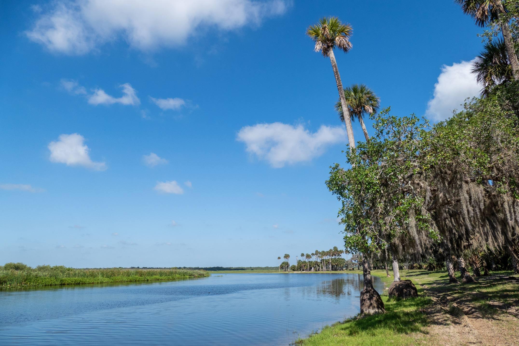 Palm trees on the shore of Lake Monroe